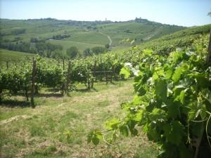 La Valutazione Ambientale Strategica di piani e programmi della Regione Toscana