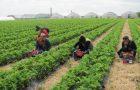 L'agricoltura sociale come modello di inclusione sociale: a che punto siamo?