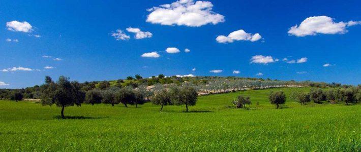 La programmazione del turismo e della mobilità sostenibile nelle aree naturali protette: il caso della Puglia