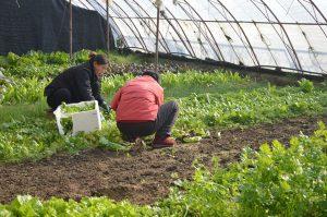Agricoltura biologica e biodistretti. L'esperienza della Val Camonica