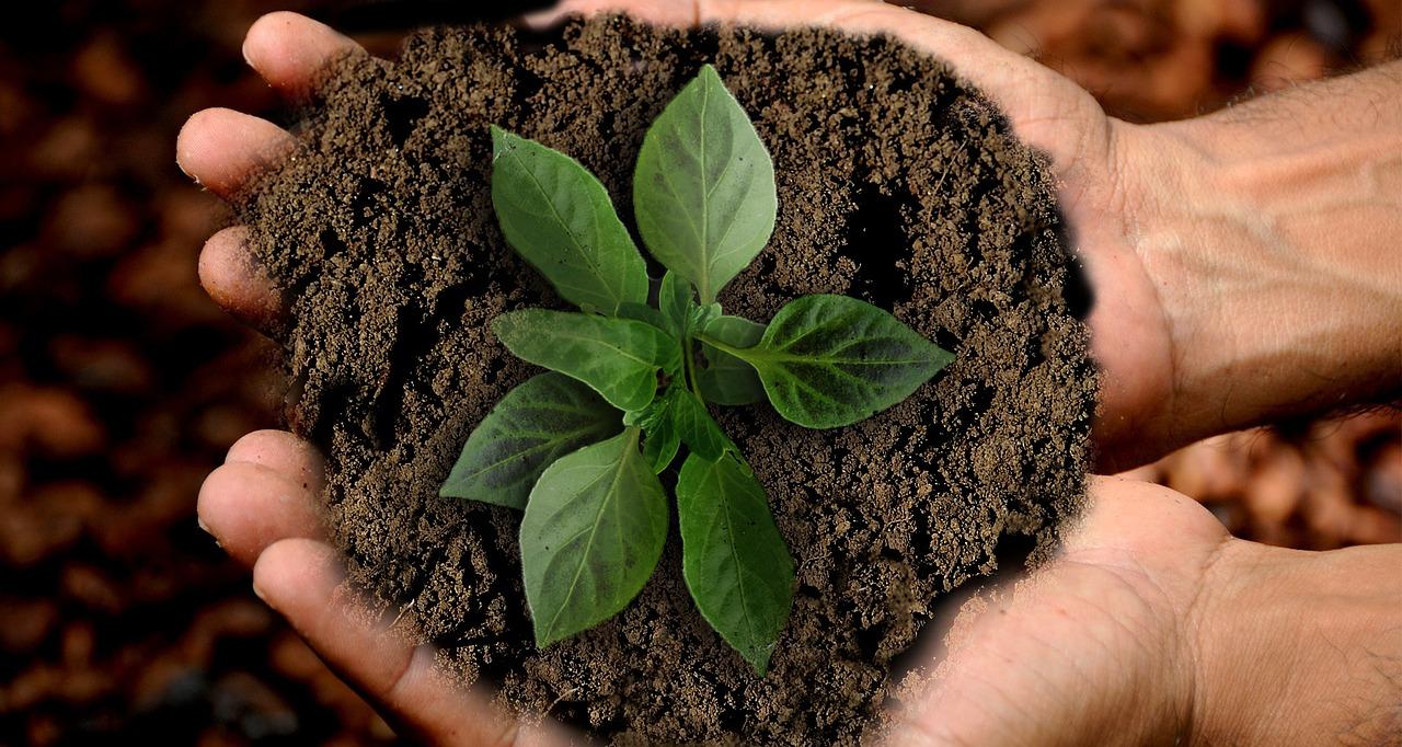 Agricoltura sociale come innovazione sociale. Il ruolo del Forum Nazionale dell'Agricoltura sociale